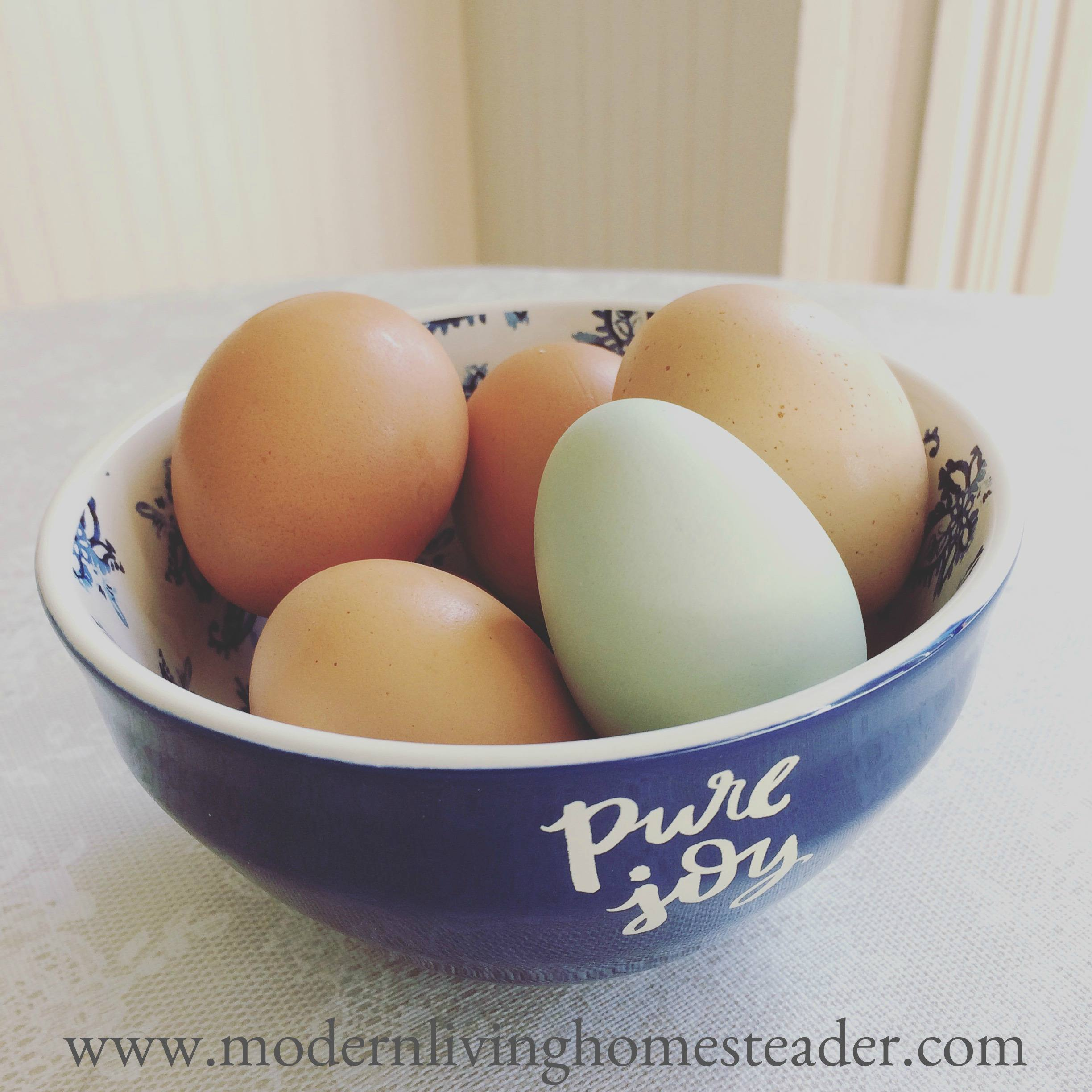 Despite pretty labels in the supermarket egg case, it's not easy to understand what you are buying. This post explains the differences, and why they matter. www.modernlivinghomesteader.com